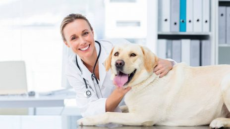 Nebraska Vet Services: Successful Acumatica ERP Implementation