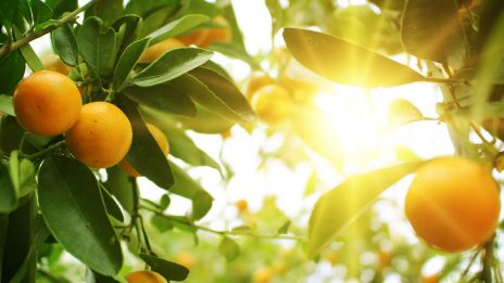 C&O Nursery: Successful Acumatica ERP Implementation